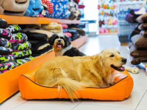 Pet shop é um bom negócio?